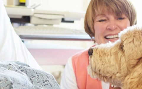 service therapy dogs that help manage pain visits woman in hospital