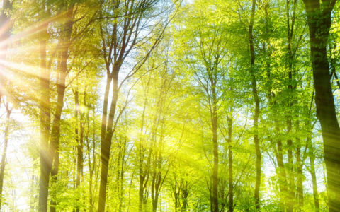 beautiful forest where forest bathing can harness the benefits of nature