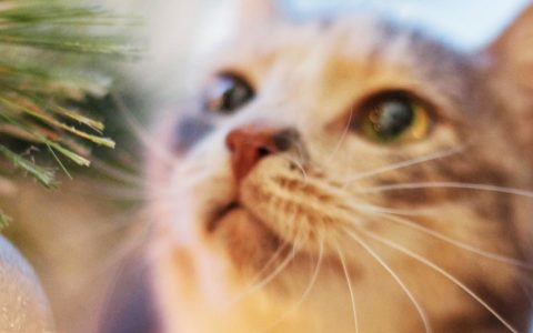 christmas safety tips for cats and dogs
