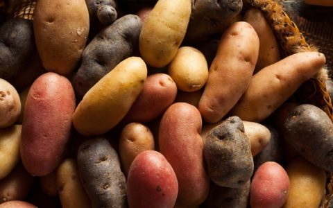 red, white and purple potatoes